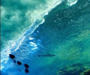 ocean, fish, and shark image