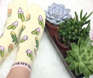 cactus, socks, and plants image