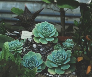 plants, flowers, and green image