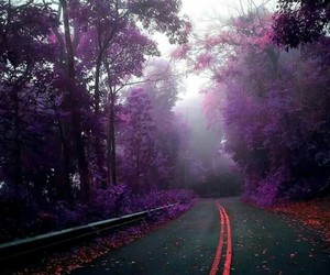 purple, nature, and place image