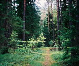 forest, leafs, and woods image
