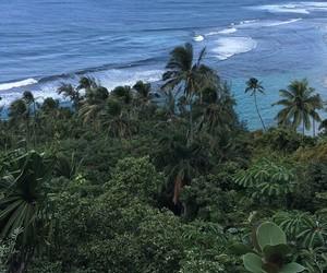 nature, sea, and trees image