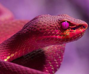 snake, animal, and pink image