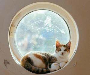 beautiful, cat, and kitten image