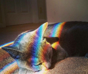 cat, rainbow, and cute image
