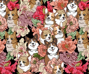 animal, background, and corgi image
