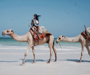 beach, camels, and cool image