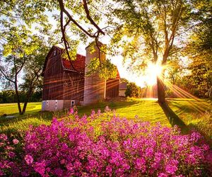 barn, farm, and flowers image