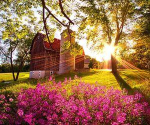flowers, barn, and farm image