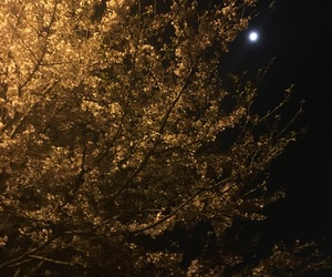 flower, moon, and night image