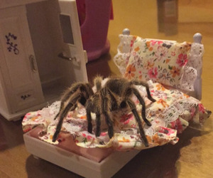 cama, cute, and tarantula image
