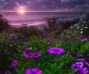 beach, sun, and flowers image