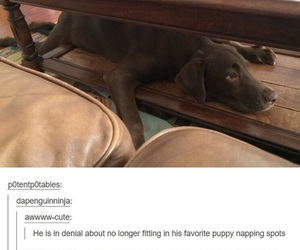 funny, dog, and tumblr image