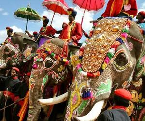animal, elephant, and indian elephant image