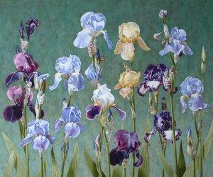 iris and irises image