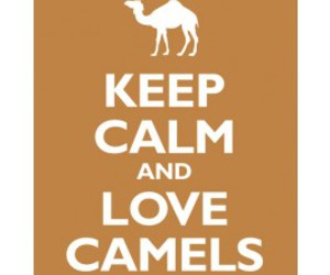 camel, camels, and cigaretts image