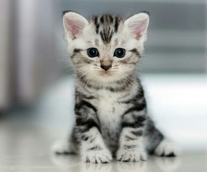 cute, cat, and animals image