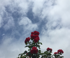 flowers, red, and rojo image