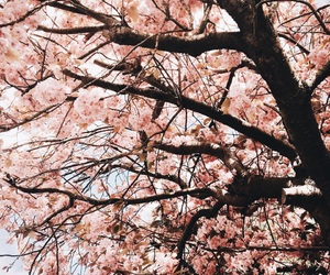blossoms, nature, and 桜 image