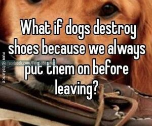 dogs, animals, and quotes image