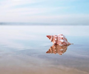 beach, photography, and shell image