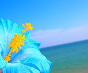 beach, blue, and flower image