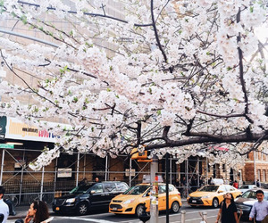 city, spring, and new york image