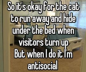 cat, antisocial, and funny image