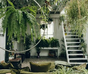 plants, interior, and design image