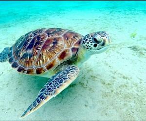beach, turtle, and sea image