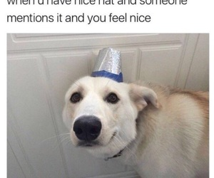 funny, dog, and cute image
