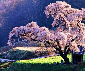 tree, japan, and nature image