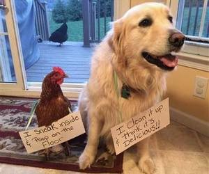 bff, Chicken, and dog image