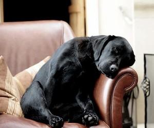 dog, animal, and sleep image