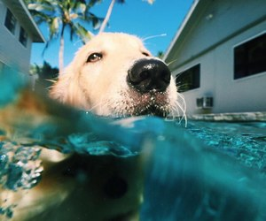 dog, summer, and puppy image