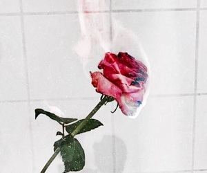 fire, grunge, and rose image