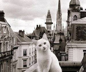 cat, city, and animal image