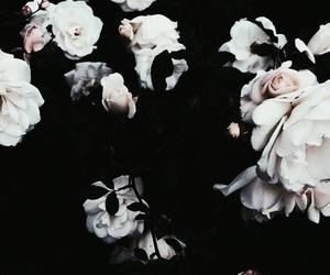 flowers, beautiful, and dark image