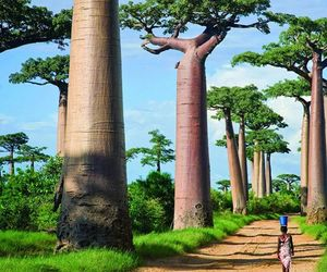 nature, madagascar, and tree image