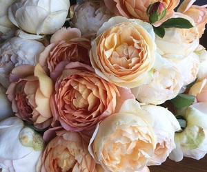 flowers, peonies, and rose image
