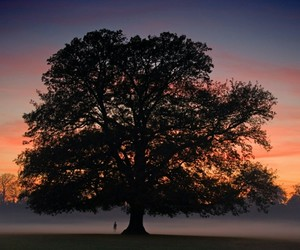 atardecer and tree image