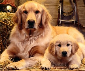 cute dogs, dog, and dogs image