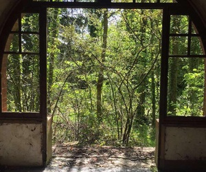 beautiful, door, and forest image