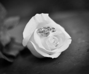 couple, rings, and rose image