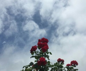 flowers, rose, and sky image