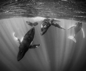 national geographic, RSS, and black and white photography image