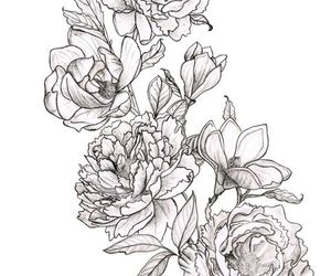 drawing, flowers, and magnolias image
