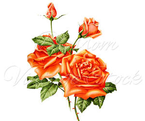 antique rose, decor, and etsy image