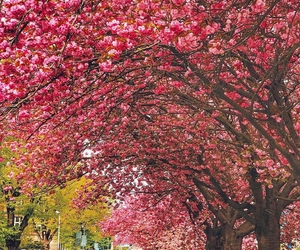 blossom, spring, and love image