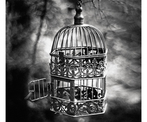 black and white and cage image